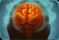 Neural Feedback