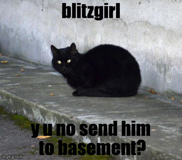 Cat basement