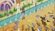 Yuma and Astral surrounded by cats