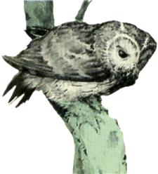 File:Owl Artwork 4 (Link's Awakening).png