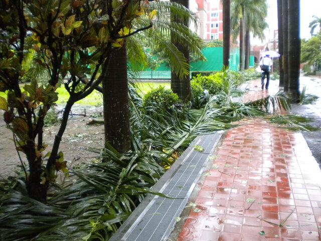 檔案:凡那比颱風的摧殘-南台科技大學7.jpg