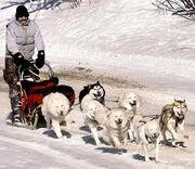 Dog sled one