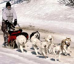 File:Dog sled one.jpeg