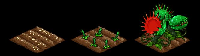 Venus Flytrap stages