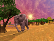 African elephant female at Sunset