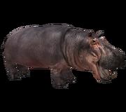 Hippob