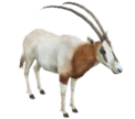 Oryxrr