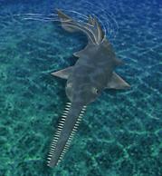 Common Sawfish