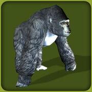 Mountain Gorilla2
