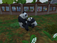 Giant pandas (ZT2)