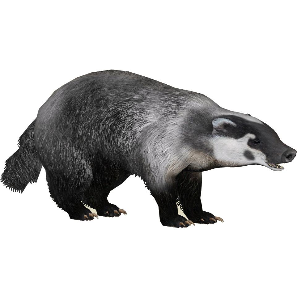 American Badger Iguano Amp Maximilian Zt2 Download