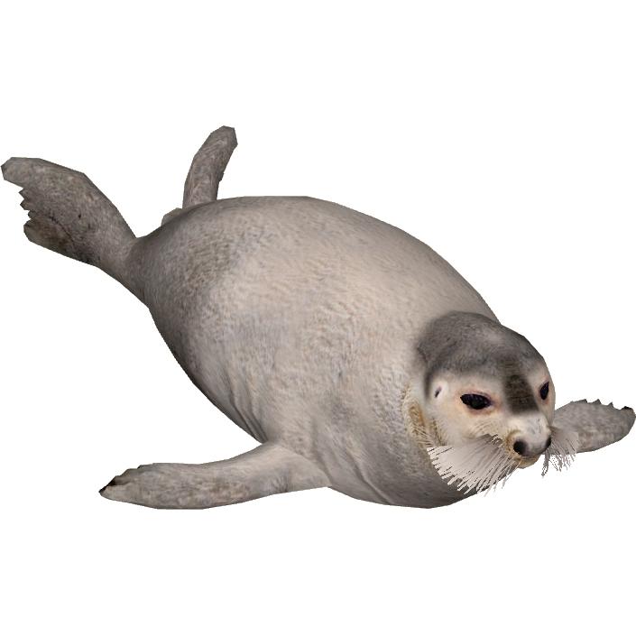Bearded Seal Tamara Henson Zt2 Download Library Wiki