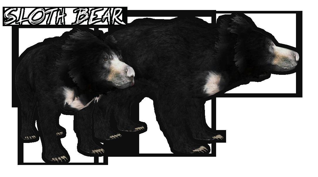 Sloth Bear Okeanos Zt2 Download Library Wiki Fandom