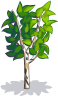 Baby Green Birch-icon.png