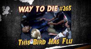This Bird Has Flu