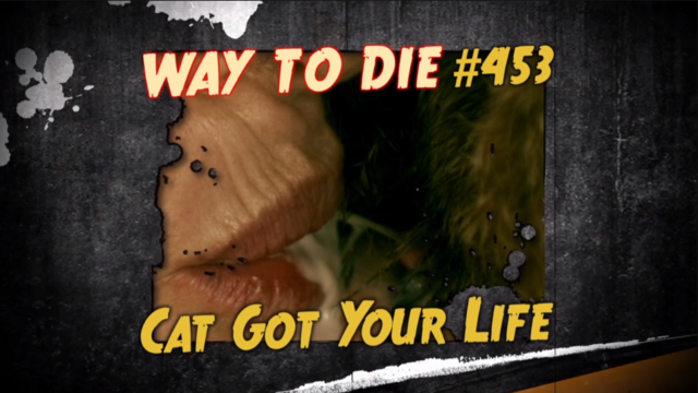 File:Cat Got Your Life.png