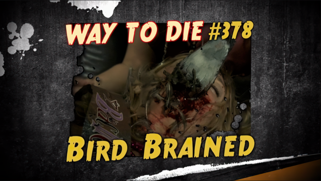 File:Bird Brained.png