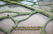 Rice fields in En