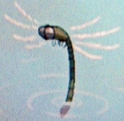 File:Dragonfly.png
