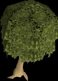 File:Mahogany tree.png