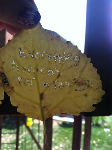 File:I carved that messge into a tiny leaf. Epic