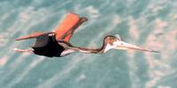 Flying Quetzalcoatlus