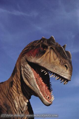 File:Allosaurus head.jpg