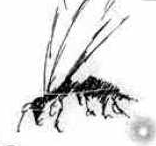 Fever wasp