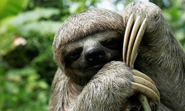 File:SlothSabotage.jpg