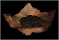 Миниатюра для версии от 21:19, октября 19, 2013
