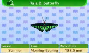RajaBButterfly