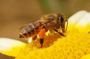 HoneybeeIRL