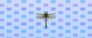 DarnerDragonfly