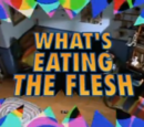 What's Eating the Flesh