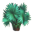File:Palm plant.png