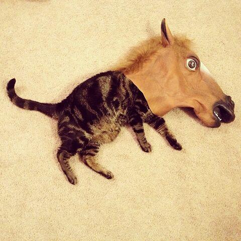 File:Cat-horse-head-mask-horse-kitten-1363043792i.jpg