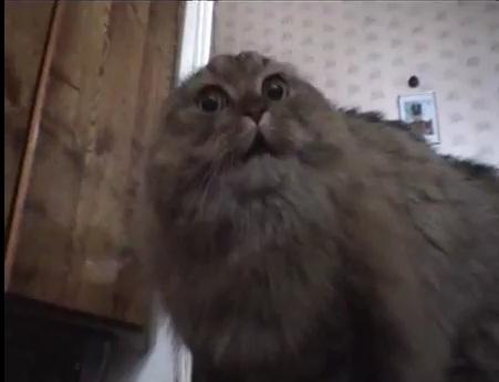 File:No no cat.jpg