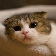 Nekoyanagi-the-cat