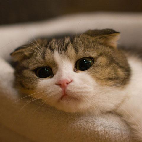 File:Nekoyanagi-the-cat.jpg