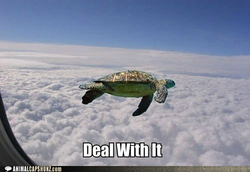 File:Funny-animal-captions-yeah-im-flyin.png
