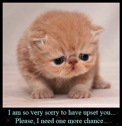 File:Cute-sad-kitten06.jpg