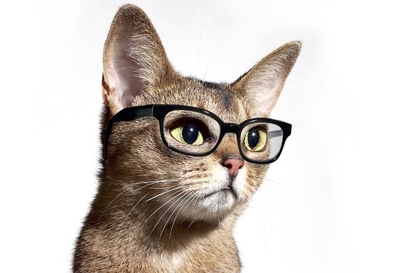 File:Cat with glasses 10 262133k-1-.jpg