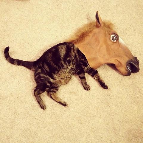 File:Kittyhorse.jpg