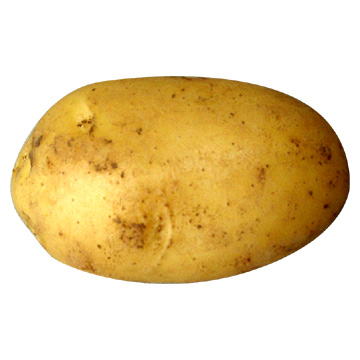 File:Potato-potato.jpg