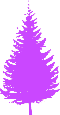 File:Spirit Day Evergreen Tree.png