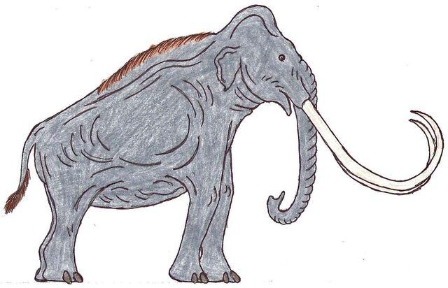 File:Mammuthus Male.jpg