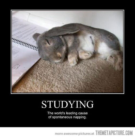 File:Funny-bunny-sleeping-studying-cute.jpg