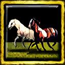 Comanche Mustangs