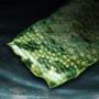 Green Snake Skin.png