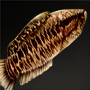 Blotched Snakehead Fish.png